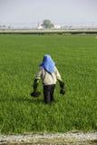 Trabajo del granjero en el campo de arroz Fotos de archivo libres de regalías