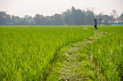Trabajo del granjero en el verde Imagenes de archivo
