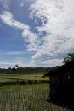 Trabajo del granjero en la luz del día con los árboles de coco en la parte posterior Foto de archivo libre de regalías