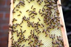 Trabajo en encargado de la abeja del peine de la miel Fotografía de archivo libre de regalías