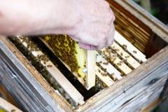Trabajo en encargado de la abeja del peine de la miel Imagen de archivo libre de regalías