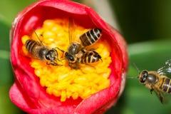 Trabajo en equipo de abejas Foto de archivo