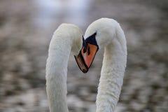Trabajo en equipo del cisne de las cabezas junto -