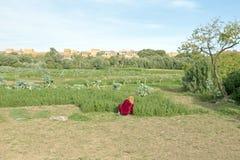 Trabajo en la tierra en un oasis Foto de archivo
