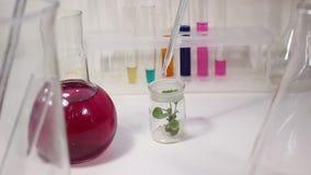 Trabajo en un laboratorio Experimentos químicos almacen de metraje de vídeo