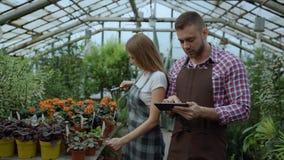 Trabajo joven de los floristas de los pares en centro de jardinería El hombre y la mujer atractivos cuentan las flores usando la  metrajes