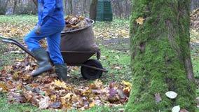 Trabajo masculino del jardinero con la carretilla vieja en jardín otoñal 4K almacen de metraje de vídeo