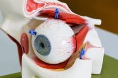 Trabajo miniatura del científico en el nodel del ojo humano Imagen de archivo