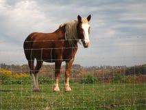 Trabajo sobre la granja de Amish Imagen de archivo libre de regalías