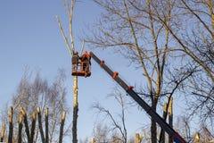 Trabajo sobre la plataforma aérea, árbol Foto de archivo libre de regalías