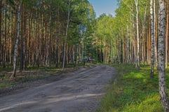 Trabajos del bosque Foto de archivo