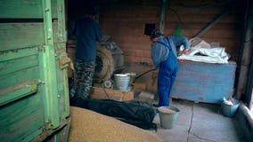 Trabajos del extremo del verano de la agricultura Hombres que tamizan el grano con la máquina retra en granero almacen de metraje de vídeo