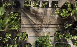 Trabajos del jardín de la primavera Lugar para la tipografía foto de archivo libre de regalías
