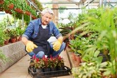 Trabajos del jardinero en el centro de jardinería imagen de archivo libre de regalías