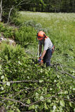 Trabajos del leñador y del bosque Imagen de archivo