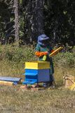 Trabajos en un colmenar que recoge la miel de la abeja Foto de archivo