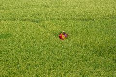 Trabalhador da agricultura Foto de Stock Royalty Free