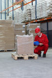 Trabalhador de agachamento que verific a especificação Imagem de Stock Royalty Free