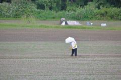 Trabalhador de campo asiático que veste um chapéu cônico Imagens de Stock Royalty Free