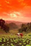 Trabalhador de campo da exploração agrícola Imagem de Stock