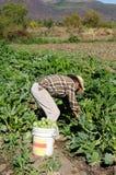 Trabalhador de campo emigrante mexicano Foto de Stock Royalty Free
