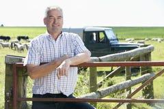Trabalhador de exploração agrícola com rebanho dos carneiros imagens de stock royalty free