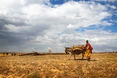 Trabalhador de exploração agrícola de Maasai com asno imagem de stock