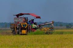 Trabalhador de exploração agrícola que colhe o arroz fotografia de stock