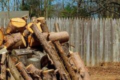 Trabalhador do lenhador com log do corte da serra de cadeia da madeira Fotos de Stock Royalty Free