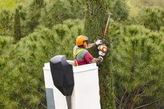 Trabalhador equipado que poda uma árvore em um guindaste Jardinagem foto de stock