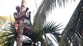Trabalhador fixado com parte superior da palmeira dos cortes da corda com machete enorme filme