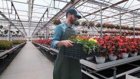 Trabalhador industrial feliz Carry Boxes Full da estufa das flores Sorriso e homem feliz com flores ele que cresce vídeos de arquivo