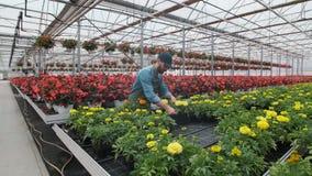 Trabalhador industrial feliz Carry Boxes Full da estufa das flores Sorriso e homem feliz com flores ele que cresce video estoque