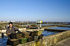 Trabalhador na exploração agrícola da ostra Imagens de Stock Royalty Free