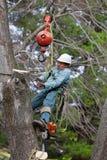 Trabalhador que conecta um cabo ao tronco de árvore Fotos de Stock Royalty Free