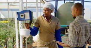 Trabalhador que pesa a cesta do mirtilo na exploração agrícola 4k do mirtilo video estoque