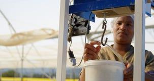 Trabalhador que pesa a cesta do mirtilo na exploração agrícola 4k do mirtilo filme