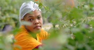 Trabalhador que trabalha na exploração agrícola 4k do mirtilo vídeos de arquivo