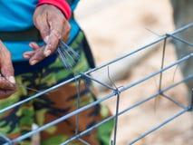 Trabalhadores da construção do aço estrutural Imagens de Stock