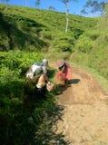 Trabalhadores da mãe da mãe que estão levando suas colheitas em Java central, Indonésia imagens de stock