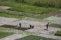 Trabalhadores de exploração agrícola Fotos de Stock Royalty Free
