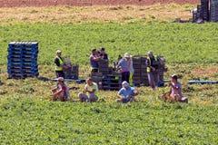 Trabalhadores de exploração agrícola emigrantes Imagens de Stock