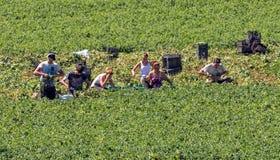 Trabalhadores de exploração agrícola emigrantes novos Imagem de Stock Royalty Free