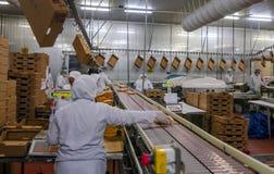 Trabalhadores de mulher muçulmanos que trabalham em uma planta de carne da galinha Imagem de Stock