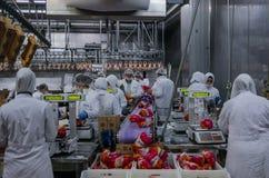 Trabalhadores de mulher muçulmanos que trabalham em uma planta de carne da galinha Foto de Stock