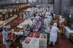 Trabalhadores de mulher muçulmanos que trabalham em uma planta de carne da galinha Fotografia de Stock