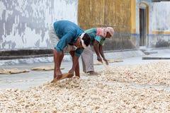 Trabalhadores do gengibre na fábrica velha do gengibre no forte Cochin, Índia imagens de stock