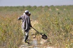 Trabalhadores na exploração agrícola em Afeganistão imagem de stock