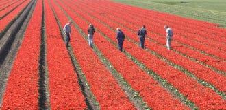 Trabalhadores no campo Imagens de Stock Royalty Free