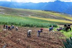 Trabalhadores no campo perto de Maras no Peru Fotografia de Stock